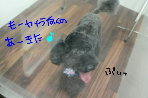 桜-!!_b0130018_23591381.jpg