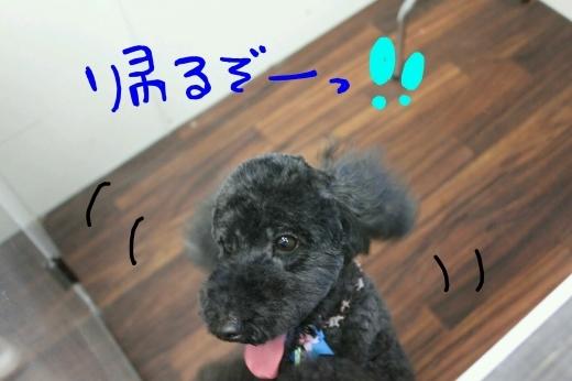 桜-!!_b0130018_23591425.jpg