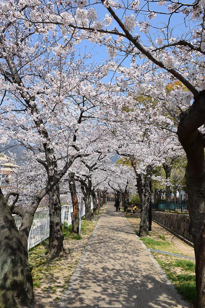 都賀川公園の桜の木の下で思う。_e0158128_17381590.jpg