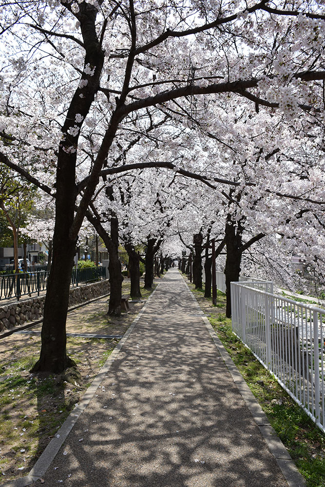 都賀川公園の桜の木の下で思う。_e0158128_1740429.jpg