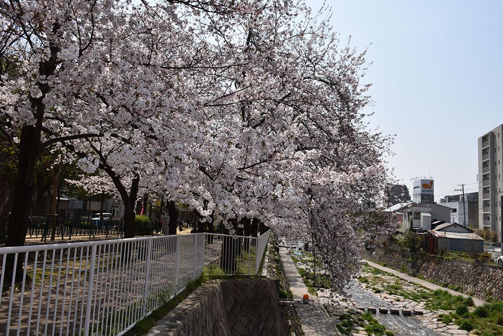 都賀川公園の桜の木の下で思う。_e0158128_1743498.jpg