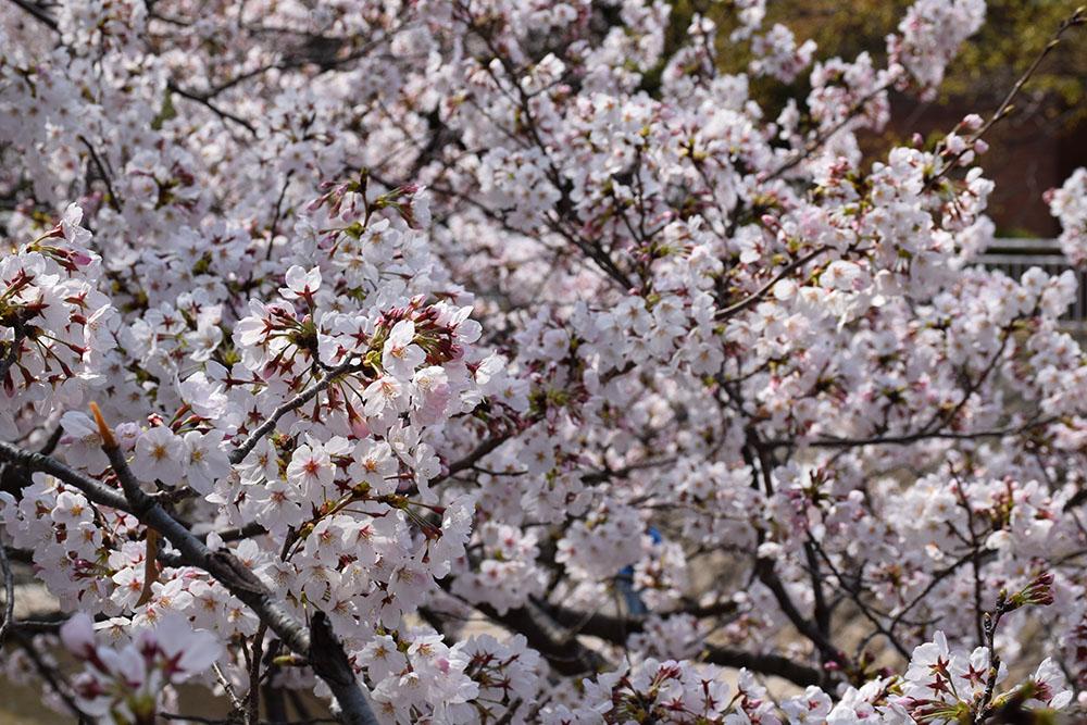 都賀川公園の桜の木の下で思う。_e0158128_17462035.jpg