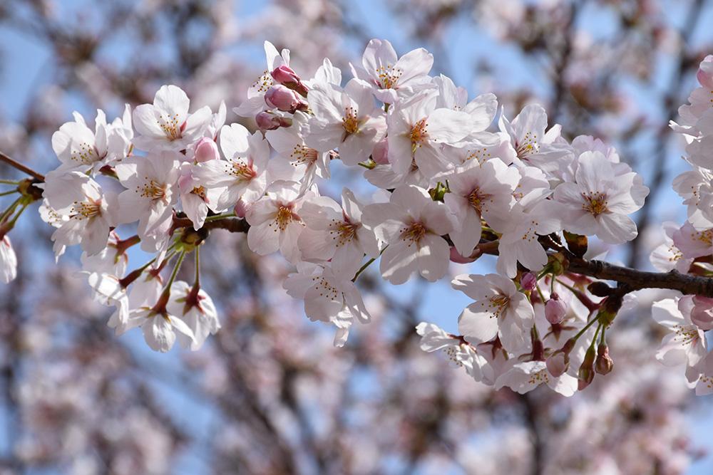 都賀川公園の桜の木の下で思う。_e0158128_17463192.jpg
