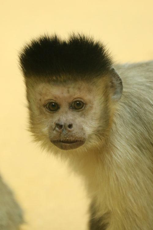 円山動物園~Monkey_f0116528_20491783.jpg