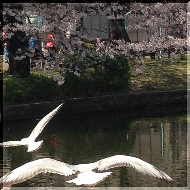 上野・不忍池へ・・・・。_e0054438_1830182.jpg