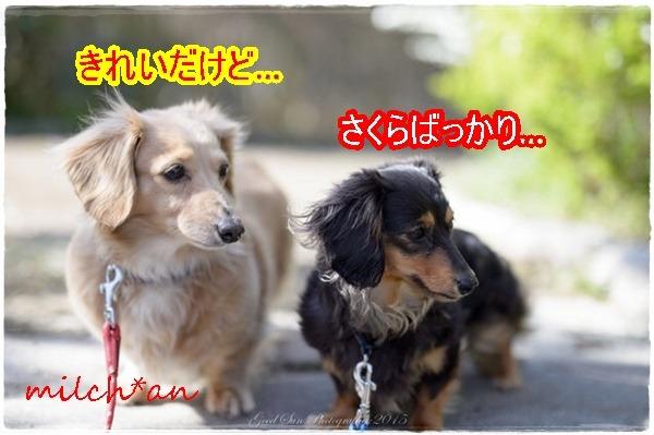b0115642_2225784.jpg