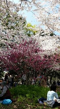 大阪 ~故郷~_b0124144_21264256.jpg
