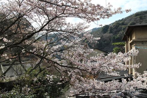 桜実況中継_c0078659_15164725.jpg