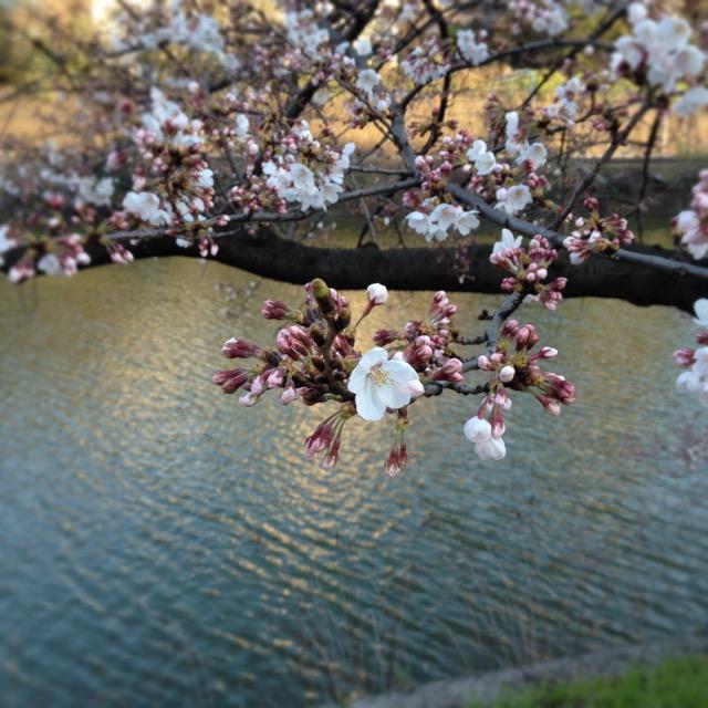 東京校 3月のソーイング講座_d0091671_241799.jpg