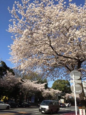 春爛漫☆_b0207873_15174528.jpg