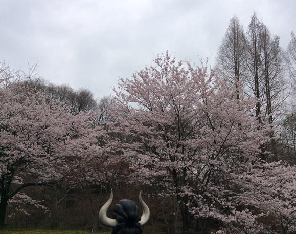 桜満開の新年度_b0273973_17545572.jpg