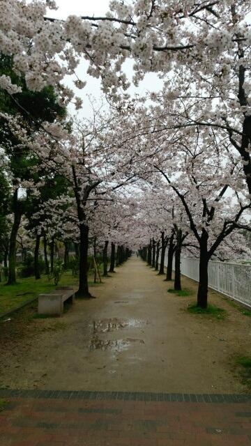 神戸のお花見名所_a0098174_12563130.jpg