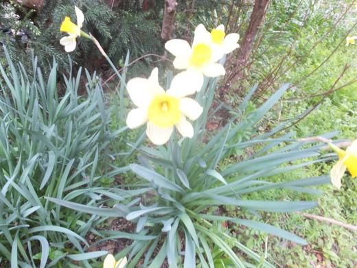 春が来た!里に来た!_d0251679_059045.jpg