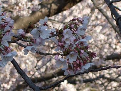 4月2日 入社式_e0190287_19513580.jpg