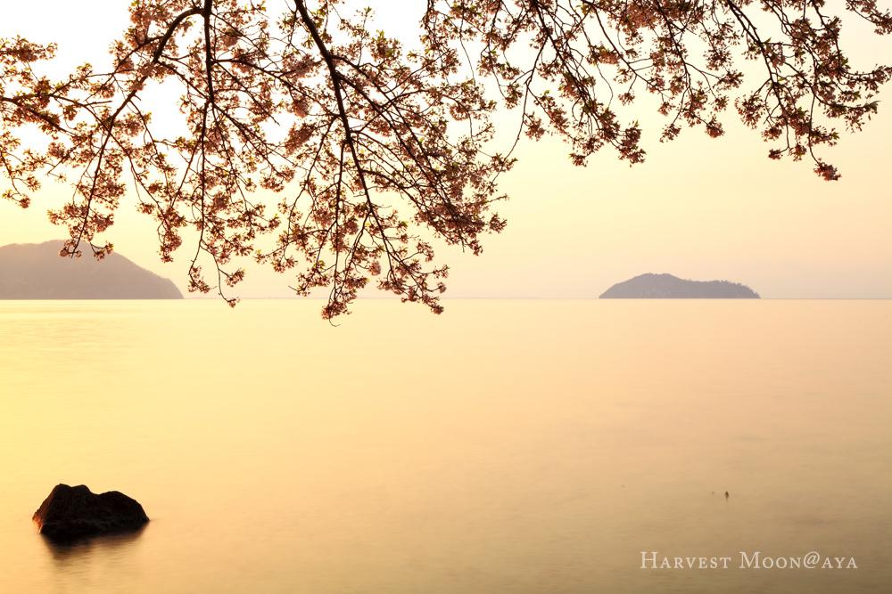 湖桜_b0208495_23581990.jpg