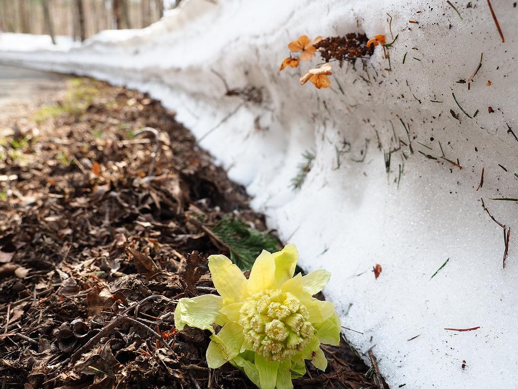 樽前山、4月1日_f0138096_12271693.jpg