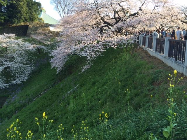 2015年の桜(7)_b0129897_4272166.jpg