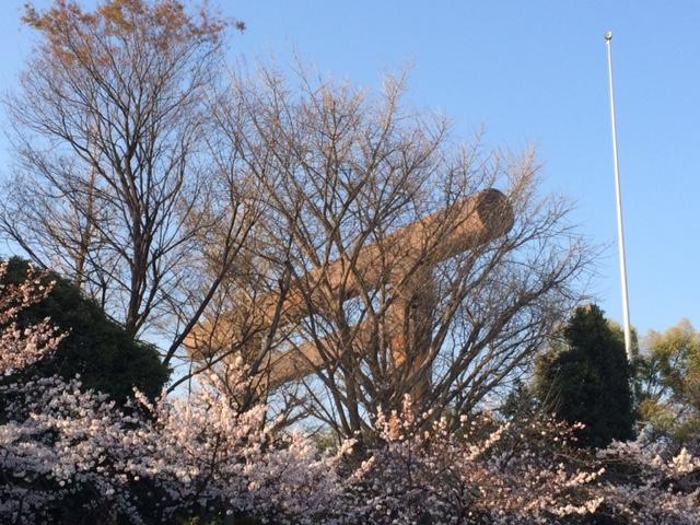 2015年の桜(7)_b0129897_4282240.jpg