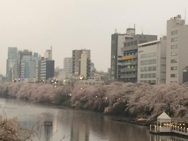 2015年の桜(8)_b0129897_5145186.jpg
