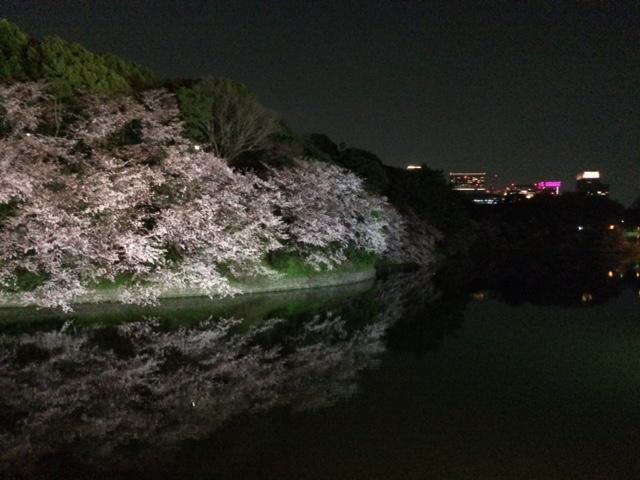 2015年の桜(9)_b0129897_5234576.jpg