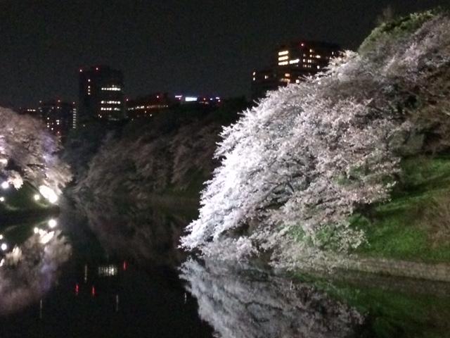 2015年の桜(9)_b0129897_524245.jpg