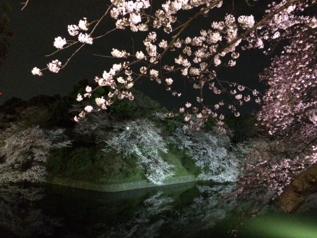 2015年の桜(9)_b0129897_5391214.jpg