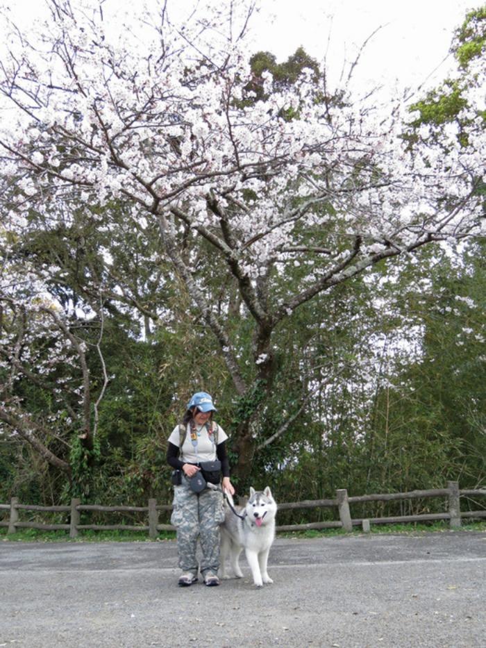 お花見さんぽ♪ (*^_^*)_c0049299_21252139.jpg
