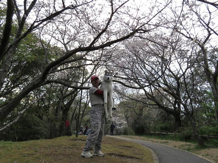 お花見さんぽ♪ (*^_^*)_c0049299_21263711.jpg