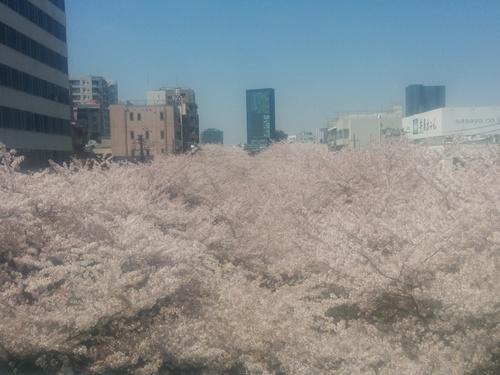 桜! 桜! 桜!@目黒川_e0123104_7191418.jpg