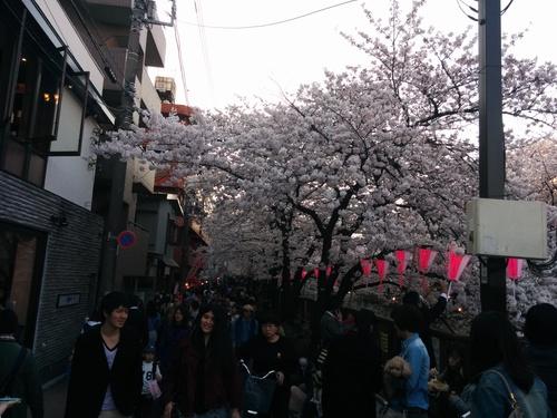 桜! 桜! 桜!@目黒川_e0123104_795958.jpg