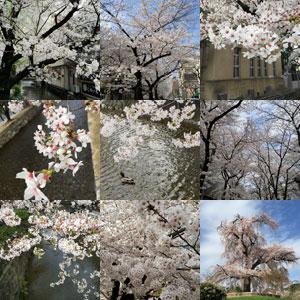 京都の桜_f0083904_200048.jpg