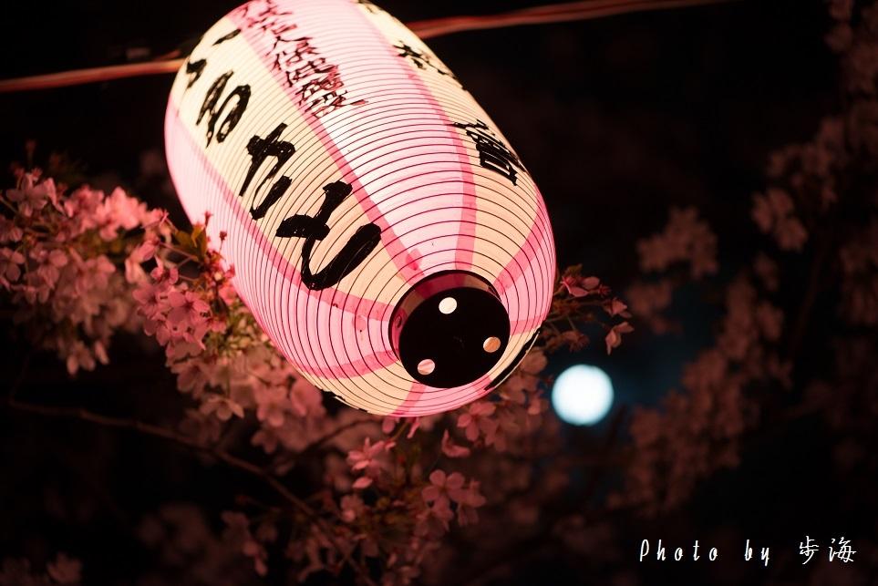 称名寺の夜桜_b0348205_23480406.jpg