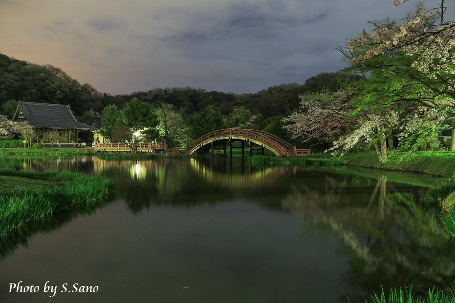 称名寺の夜桜_b0348205_23493449.jpg