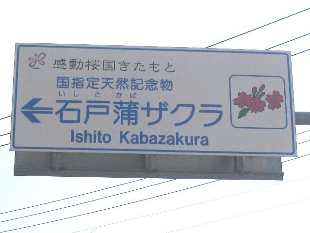 石戸蒲桜とエコストーブで芋煮_a0138609_20353177.jpg