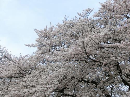 春がきて_f0269910_03332370.jpg