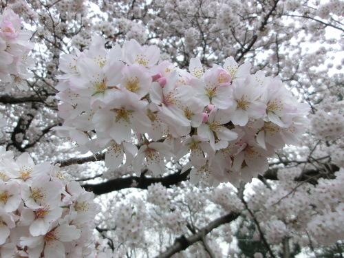 春がきて_f0269910_03340355.jpg