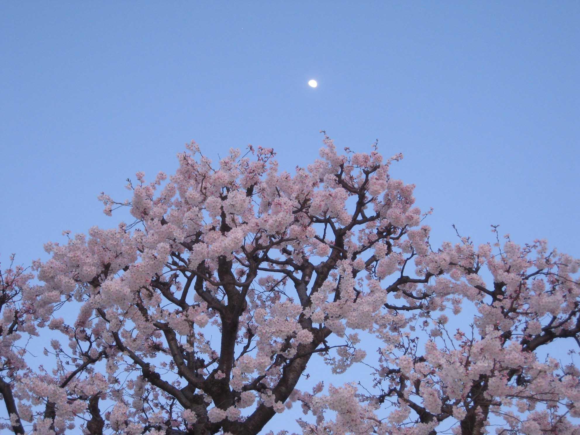 花々_f0181011_15491278.jpg