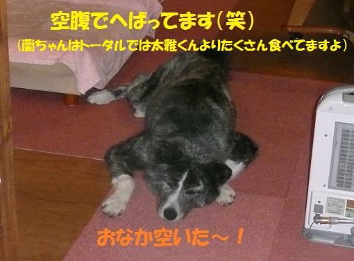 f0121712_6275975.jpg
