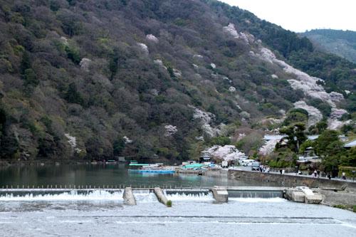 嵐山満開 2015さくら情報 20_e0048413_16361612.jpg