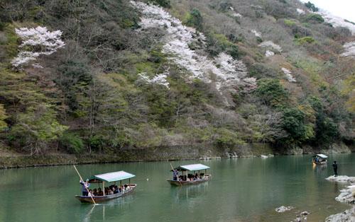嵐山満開 2015さくら情報 20_e0048413_16363965.jpg