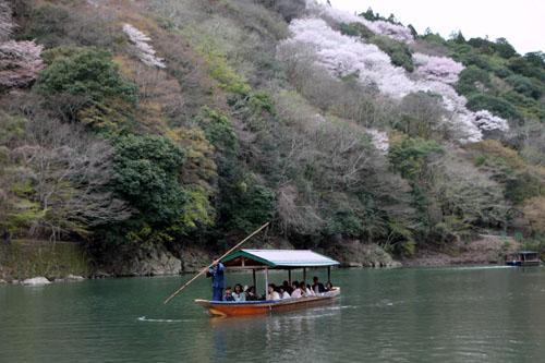 嵐山満開 2015さくら情報 20_e0048413_16365239.jpg