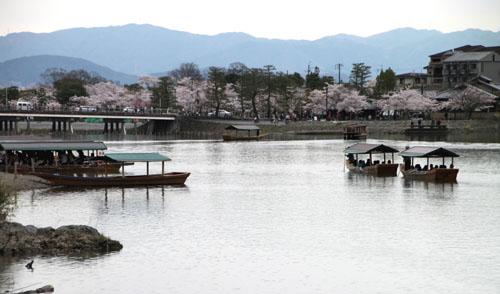嵐山満開 2015さくら情報 20_e0048413_16372511.jpg