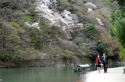 嵐山満開 2015さくら情報 20_e0048413_1637270.jpg