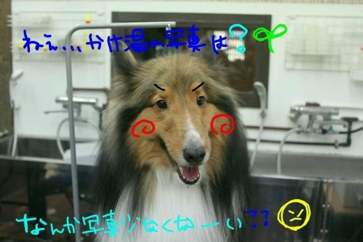 桜-!!_b0130018_00170299.jpg