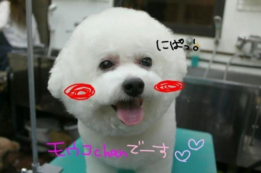 桜-!!_b0130018_00170342.jpg