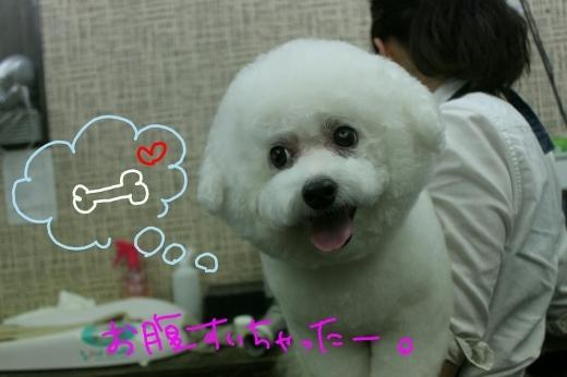 桜-!!_b0130018_00170354.jpg