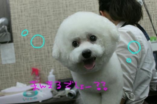 桜-!!_b0130018_00170457.jpg