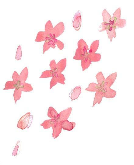 花ふぶき_f0135024_13070878.jpg
