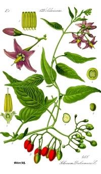 有毒な植物にご用心!(3) Giftpflanzen_d0144726_5411924.jpg