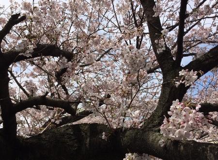 ルミノアから、春に活躍アイテム届いています。_c0227633_18451920.jpg